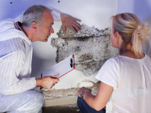 Mold Remediation Tacoma